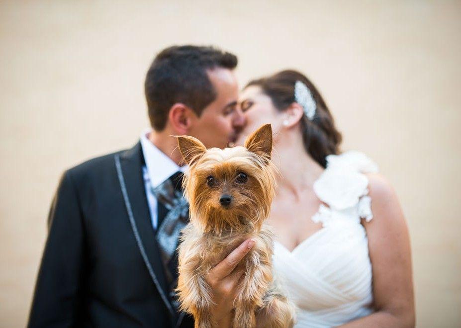 fotografo de bodas en navarra