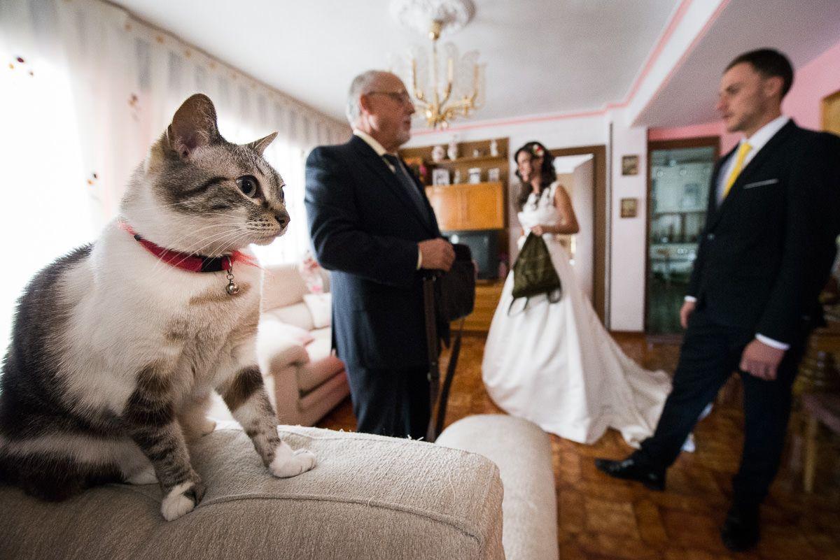 novia con gato